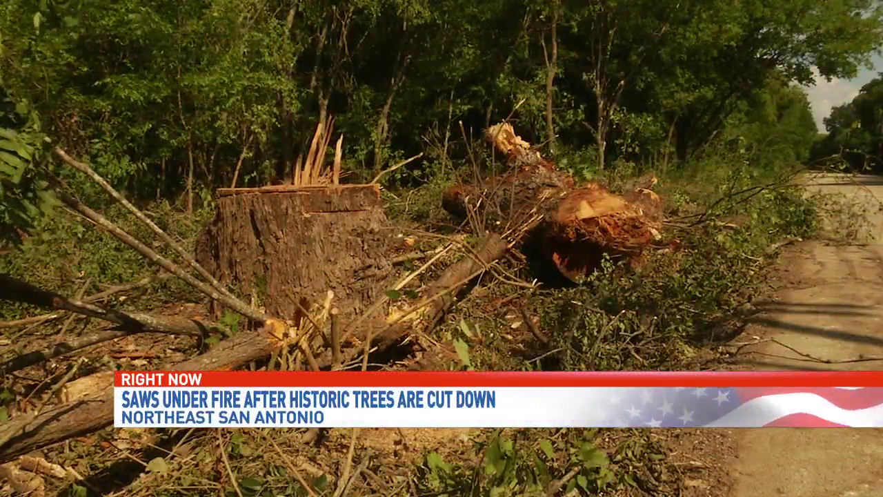Residents angry after construction tears down historic trees