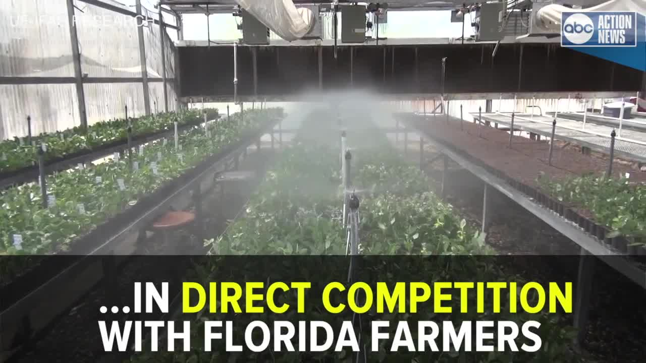 Blueberry farmers: Taxpayer-funded University of Florida
