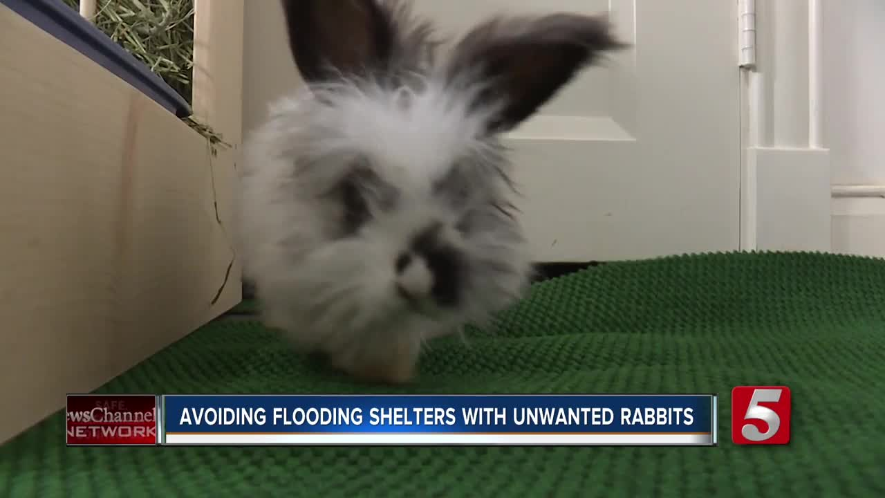 A Bunny Named Barnaby Reminds Would Be Pet Parents Bunnies Are Not An Impulse Buy