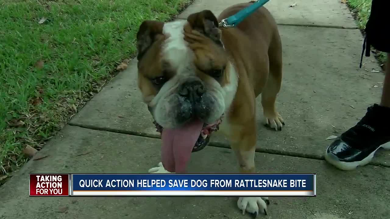 Family dog recovering after being bitten by rattlesnake in