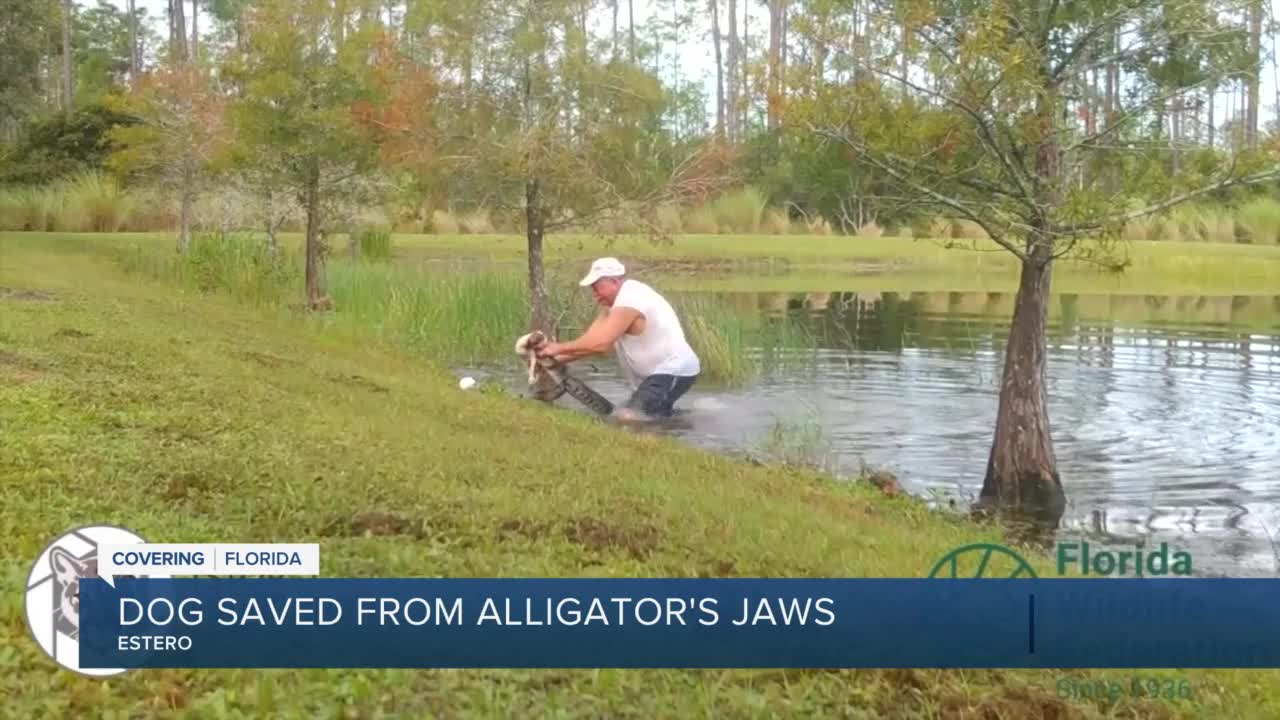 A Florida man saved a dog from certain death after an alligator snatched the puppy