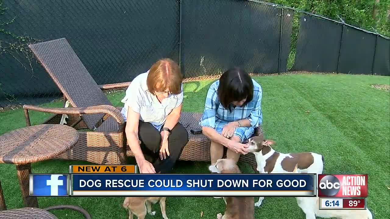 Palm Harbor dog rescue 'Canine Estates' must move or close after