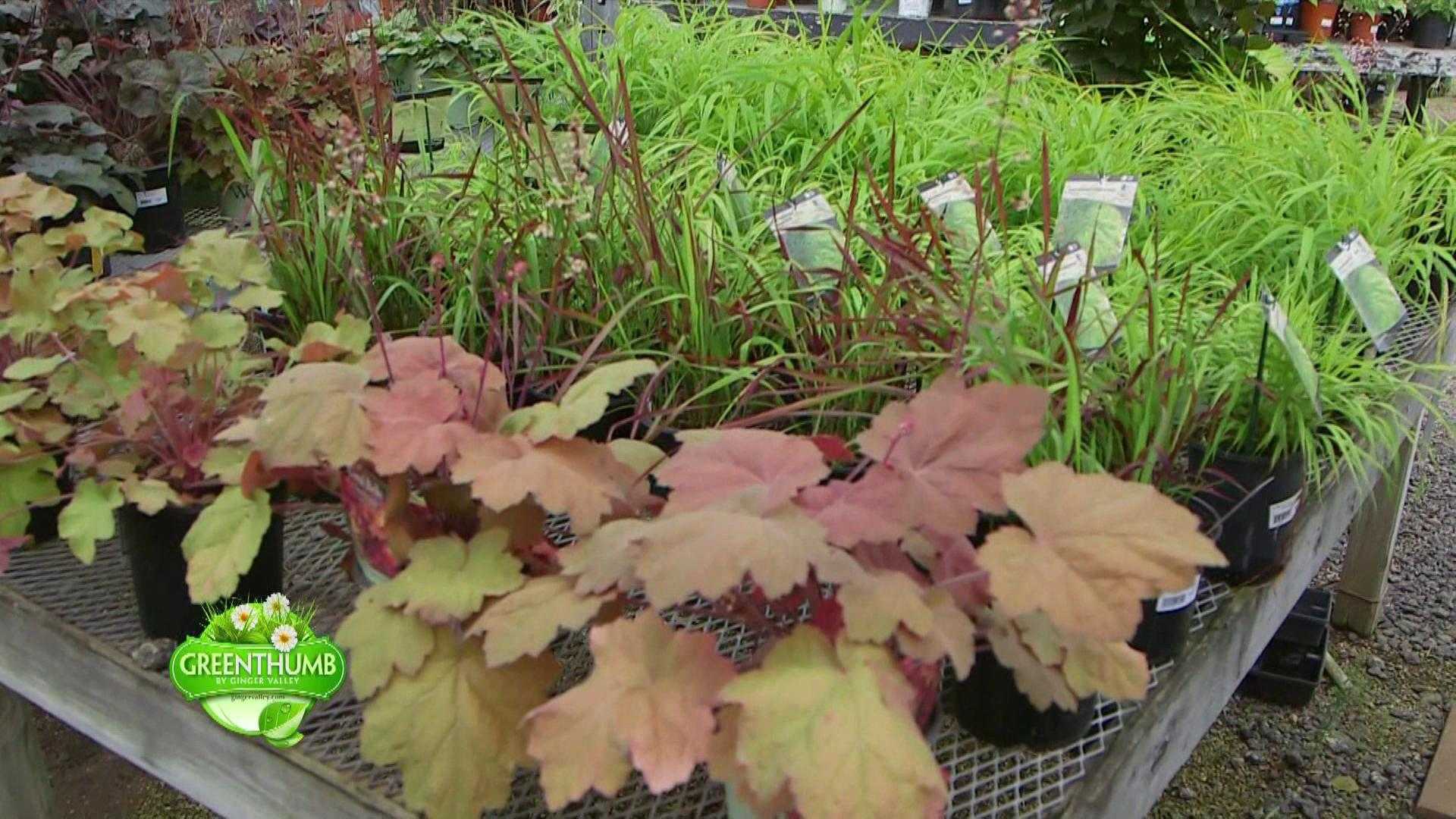 South Bend Green Thumb | News, Weather, Sports, Breaking News | WSBT