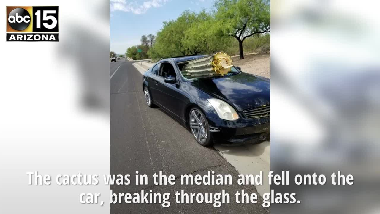 A cactus crashes through the windshield of a car in Tucson. Thankfully no one was hurt