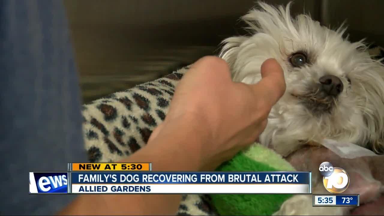 Small dog mauled at park in Allied Gardens - 10News.com KGTV-TV San ...