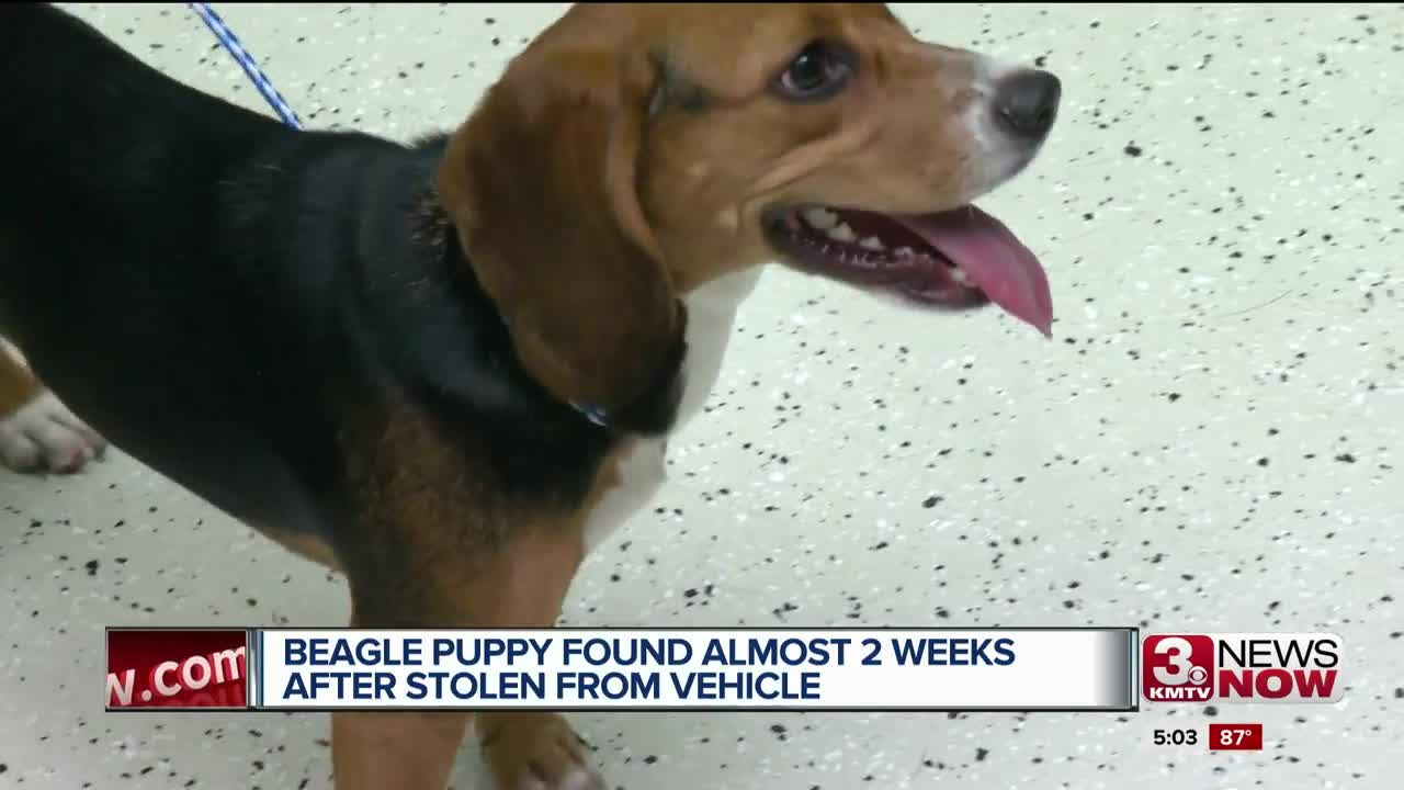 a7ce8d729b Authorities wouldn t reveal where the dog was located or if they have a  suspect. Lucky the stolen Beagle  ...
