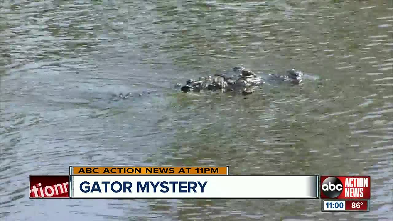 Deputies: Florida man's hand, foot found in alligator's