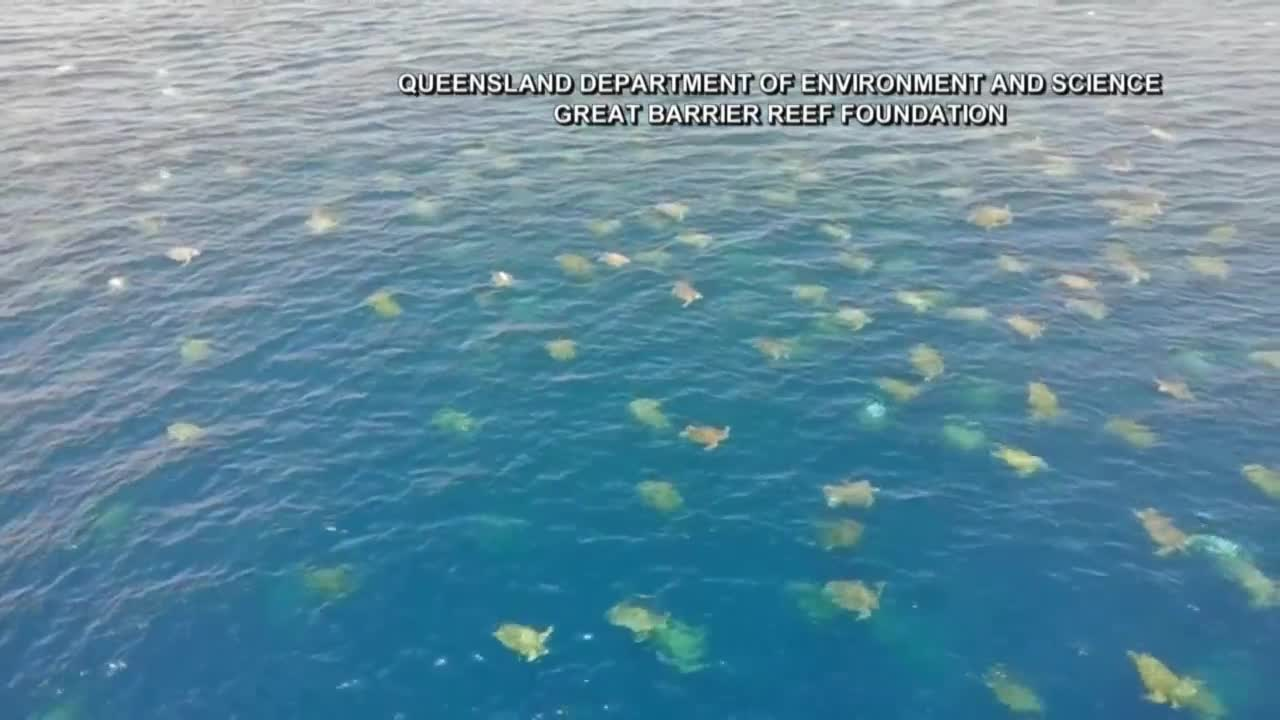 Aussie Drone Captures 64,000 Turtles Swimming Through the Great Barrier Reef