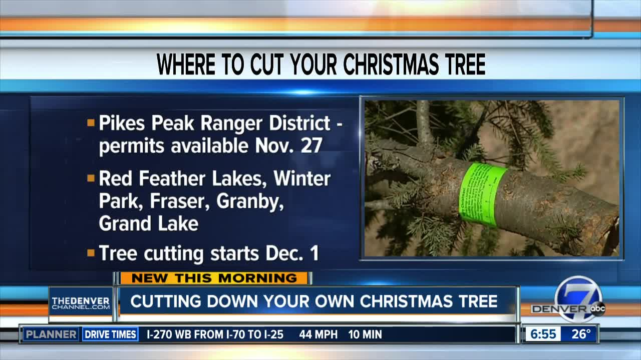 Red Feather Lakes Christmas Tree Cutting 2019 Want to cut down a Christmas tree this year? Here's where you can go
