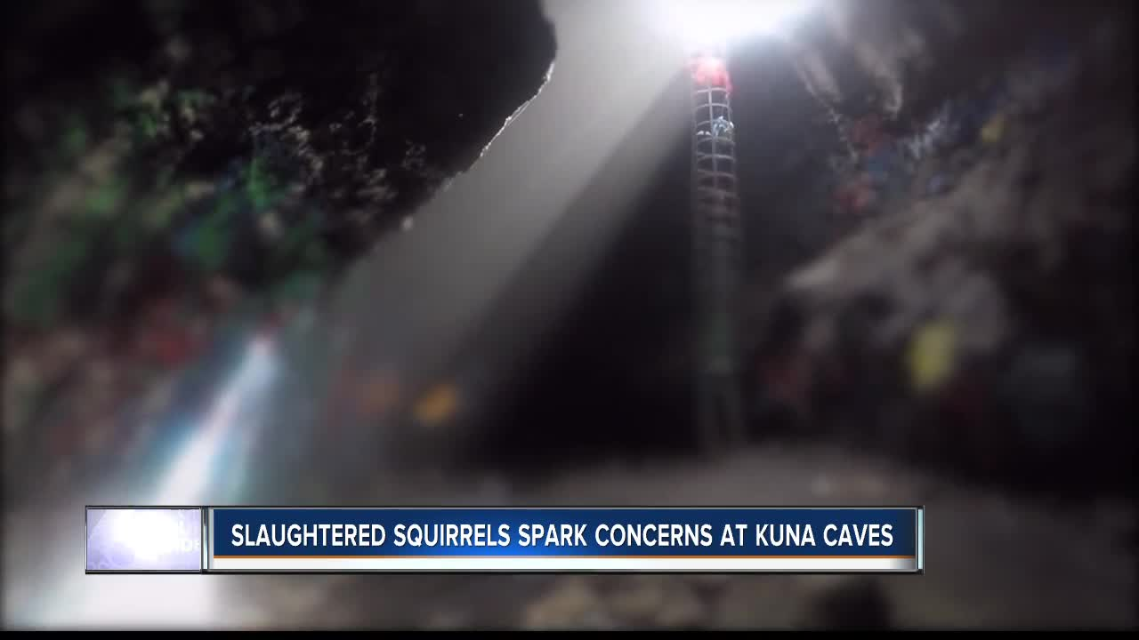 Kuna Caves Visitors Discover Mutilated Animals