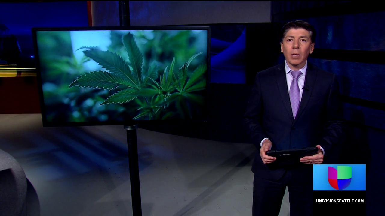 Proponen legalizar la siembra de canabis en casa