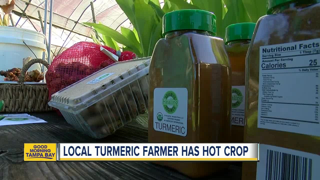 Florida farmer believes his crop of organic turmeric can help with