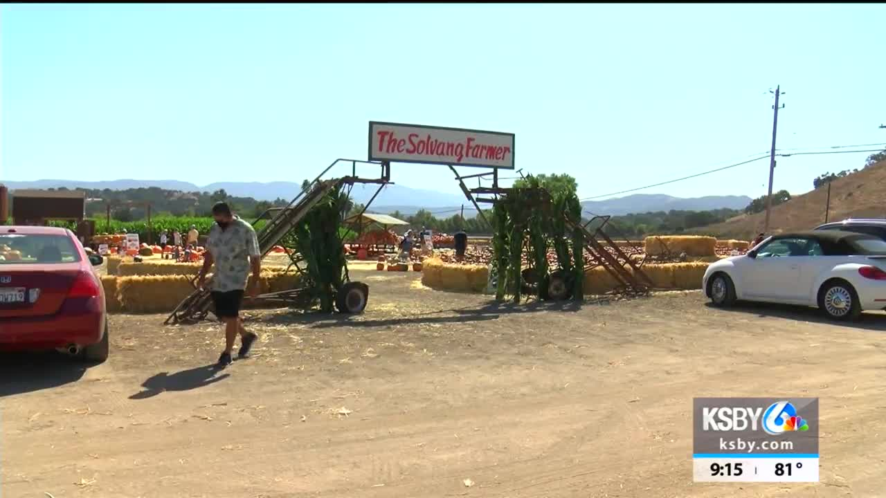 Central Coast pumpkin patches welcome guests with COVID-19 ...