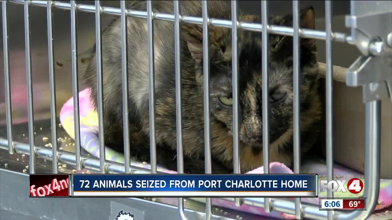 72 Animals Removed From Port Charlotte Home Due To Filthy Conditions