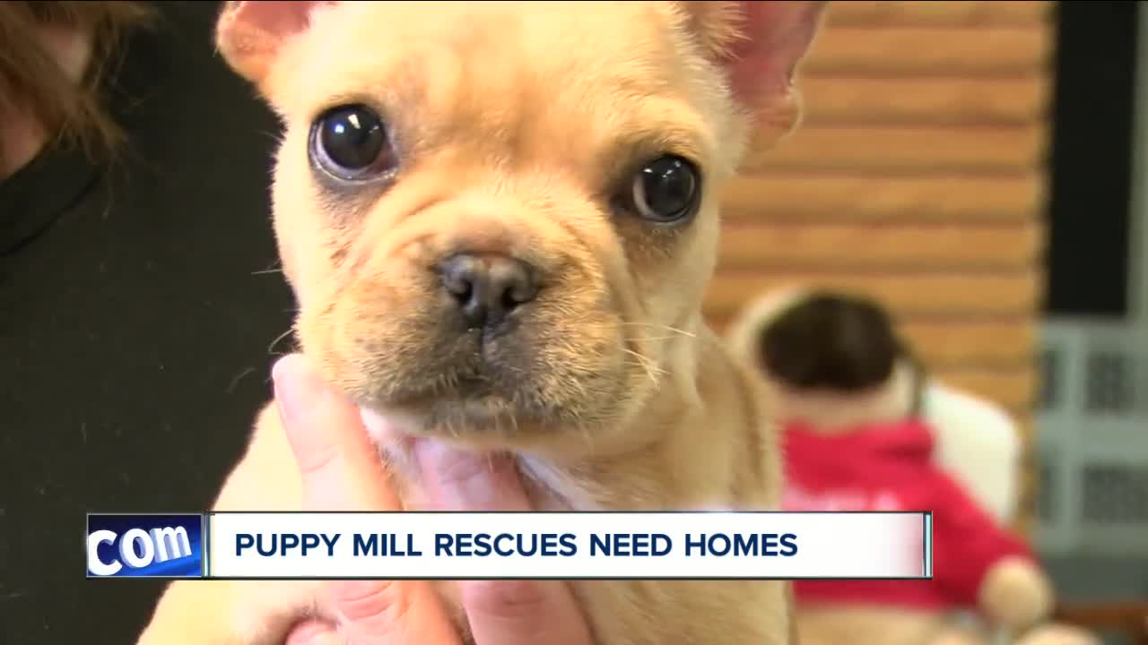 Dozens of dogs need homes after Buffalo group helps with