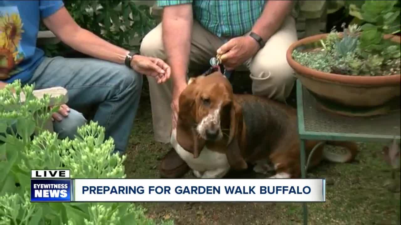 How to get around America\'s largest Garden Walk - WKBW.com Buffalo, NY