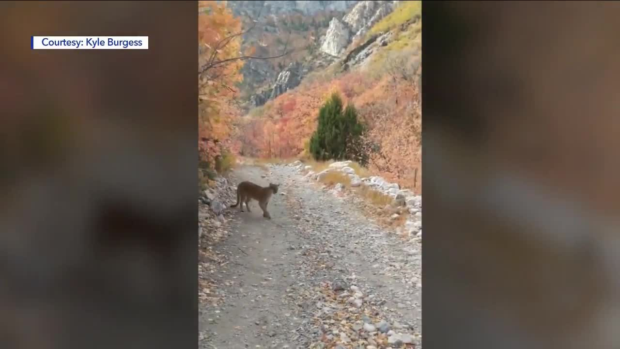 Video Shows Man Being Stalked by Mountain Lion for 6 Minutes