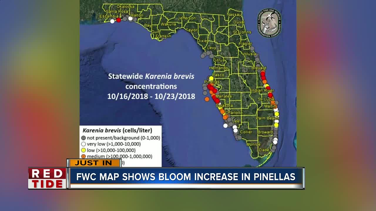Red Tide High Concentrations Increase Offshore In Pinellas Manatee
