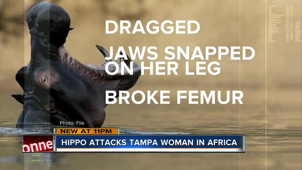 Florida woman attacked by hippo after canoe capsizes on