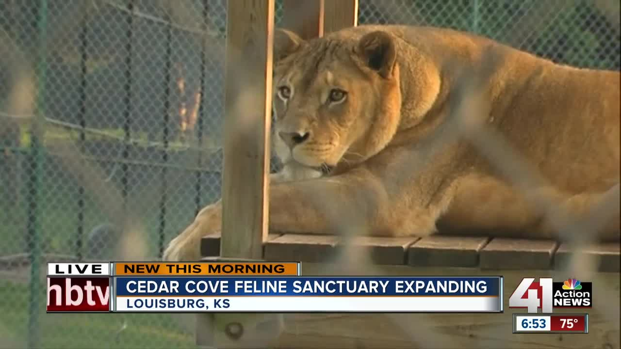 Big cat sanctuary is getting bigger: Louisburg's Cedar Cove has