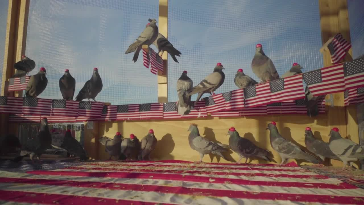 Mysterious group protests Dem debate by unleashing pigeons wearing MAGA hats