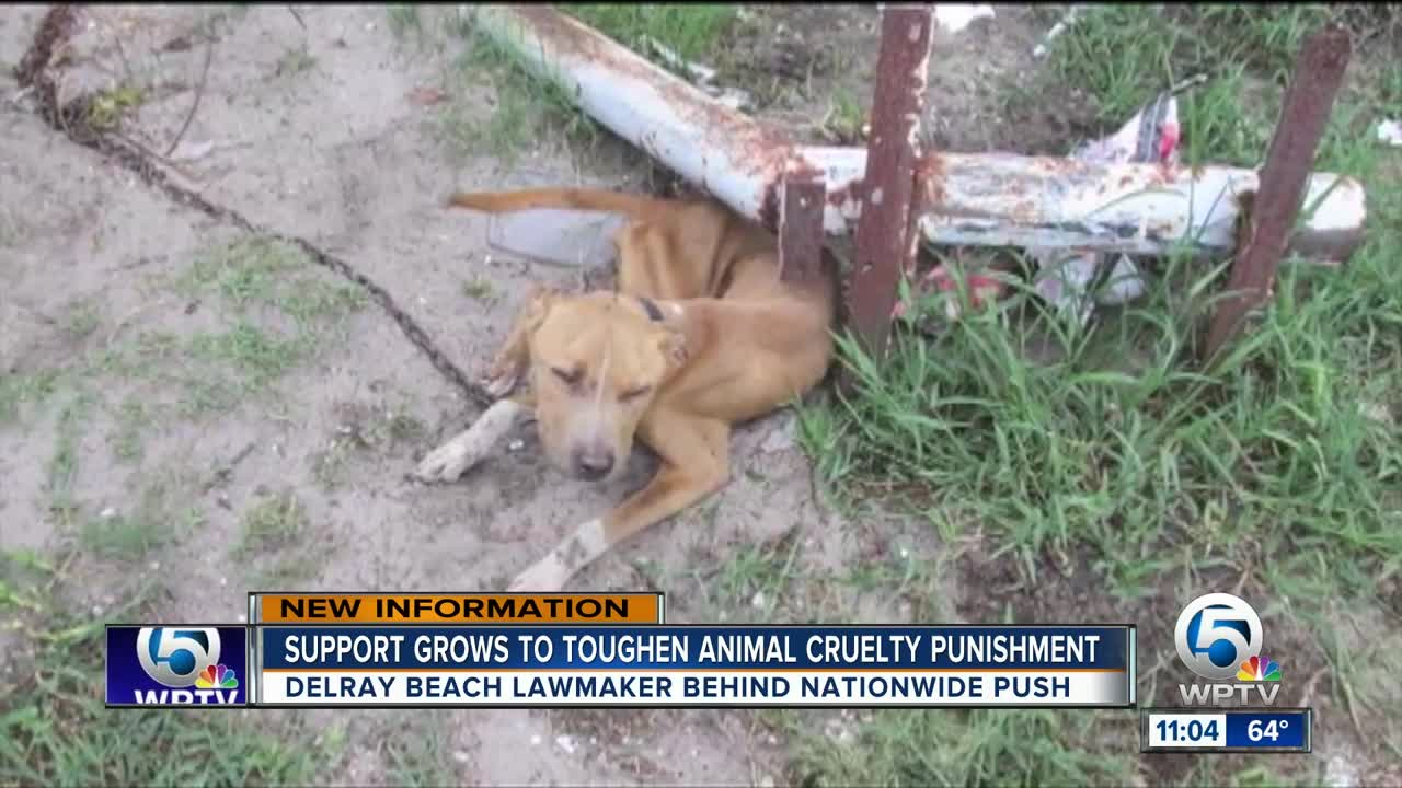 Congressmen from Florida cracking down on animal cruelty