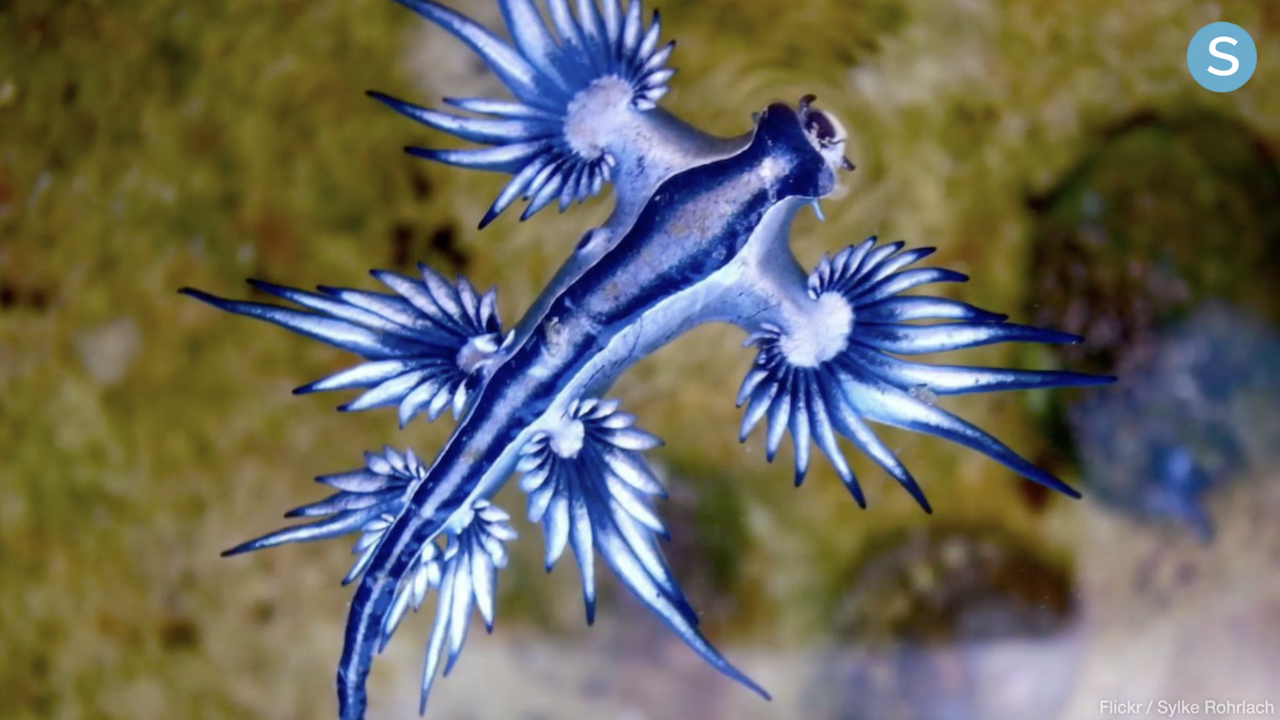 The Craziest Sea Creatures You've Ever Seen - Simplemost