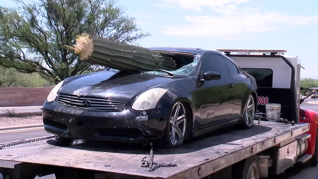 Saguaro cactus pierces car's windshield in Tucson crash