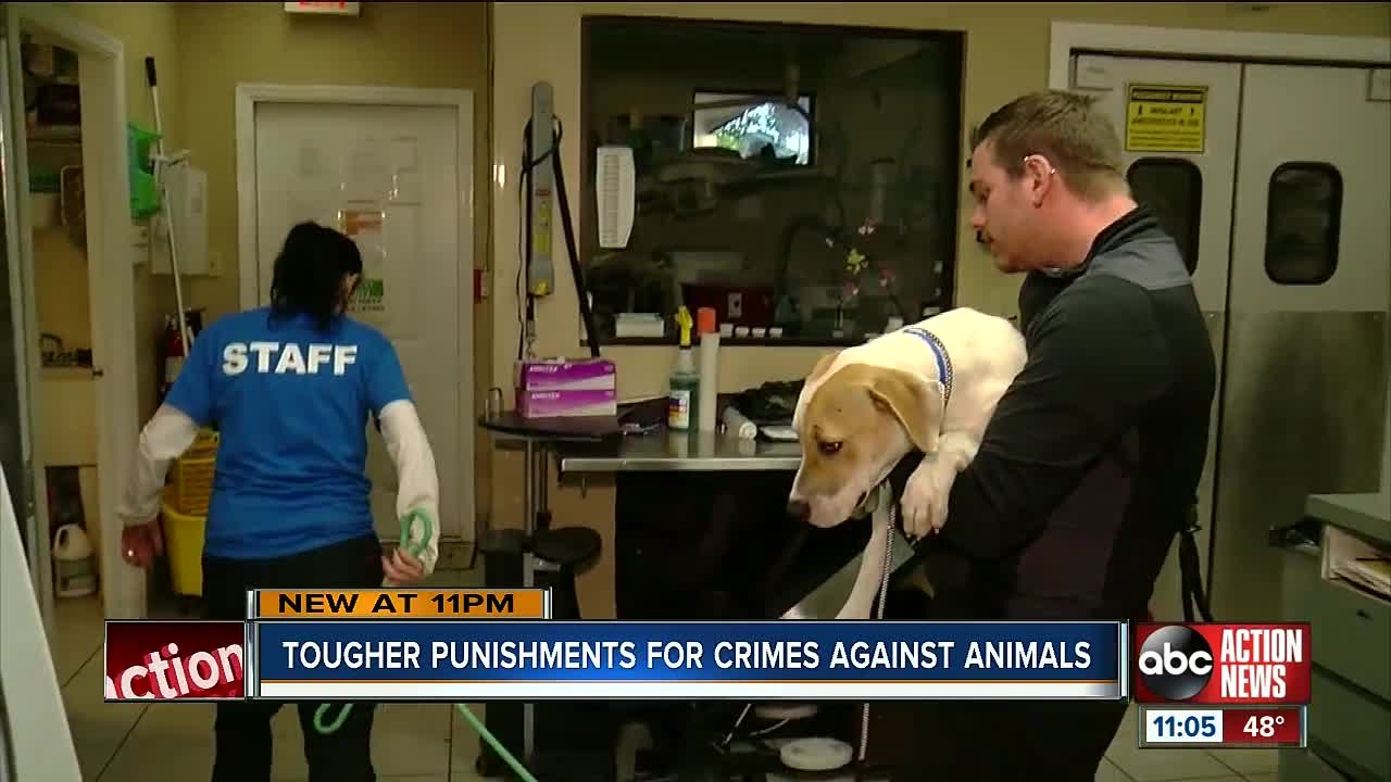 Florida congressmen's bill would make animal cruelty a federal felony