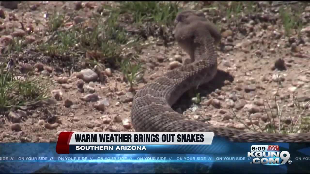 Poison Control Has Seen 13 Rattlesnake Bites Since Jan 11