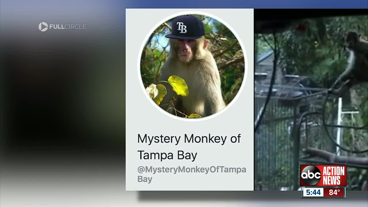 Florida's herpes-infected monkey population is booming and