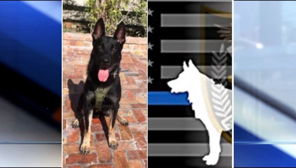 K-9 shot and killed at Florida shopping center