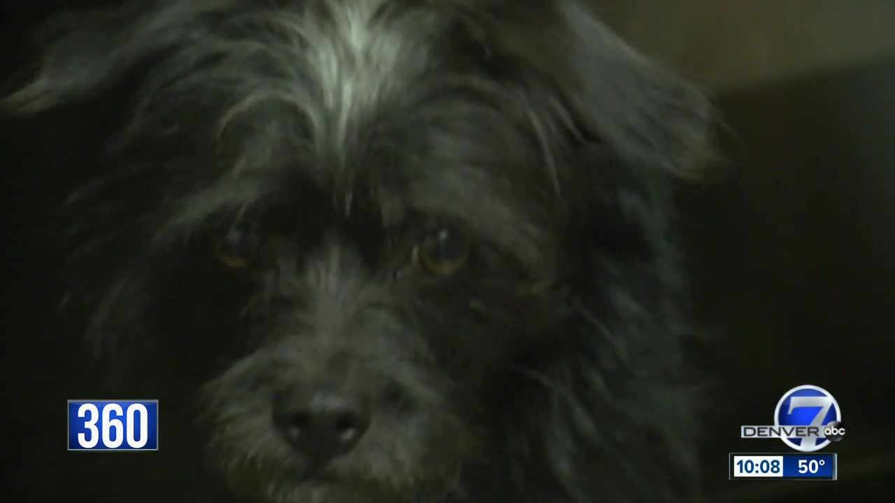 No-kill' or humanely euthanize: What's best for Colorado shelter