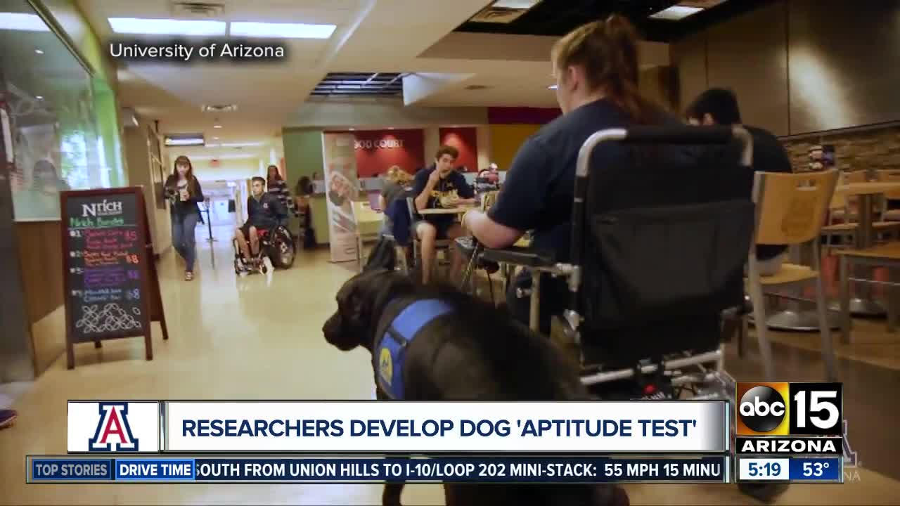 University of Arizona studies dog intelligence with 'Canine Aptitude