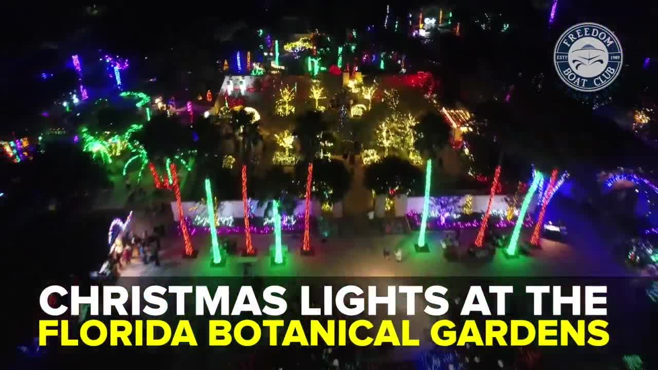 Lowry Park Zoo Christmas.Check Out These Christmas Lights In Tampa Bay