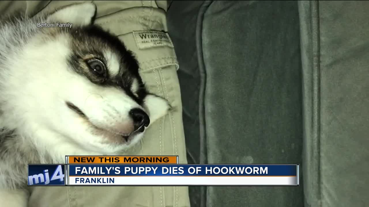 Franklin couple says breeder did not disclose parasites that