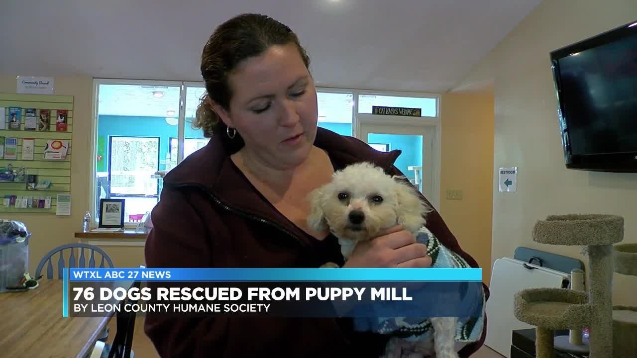 Nearly 700 dogs rescued from