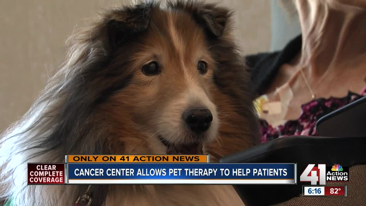 Therapy pets provide love, support to Kansas City patients: \'I truly ...