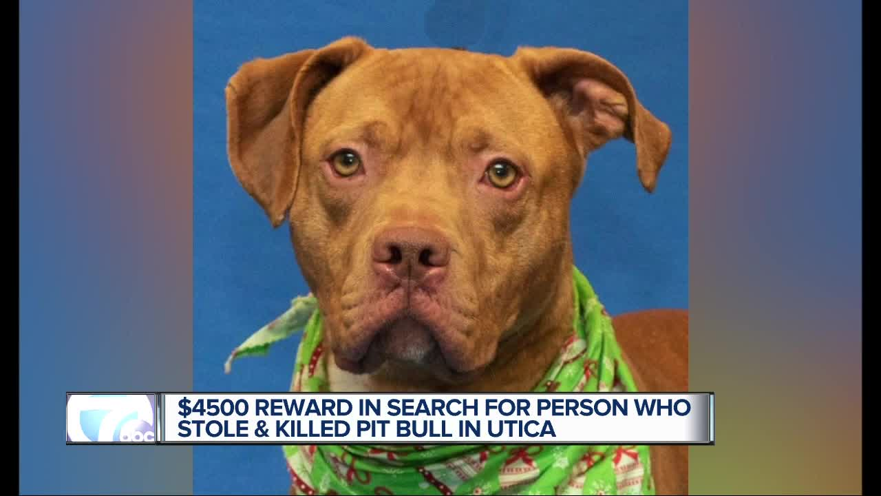 Man pleads no contest to killing, torturing Sterling the dog