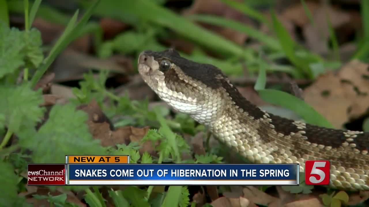 Homeowners could see more snakes as they come out of hibernation