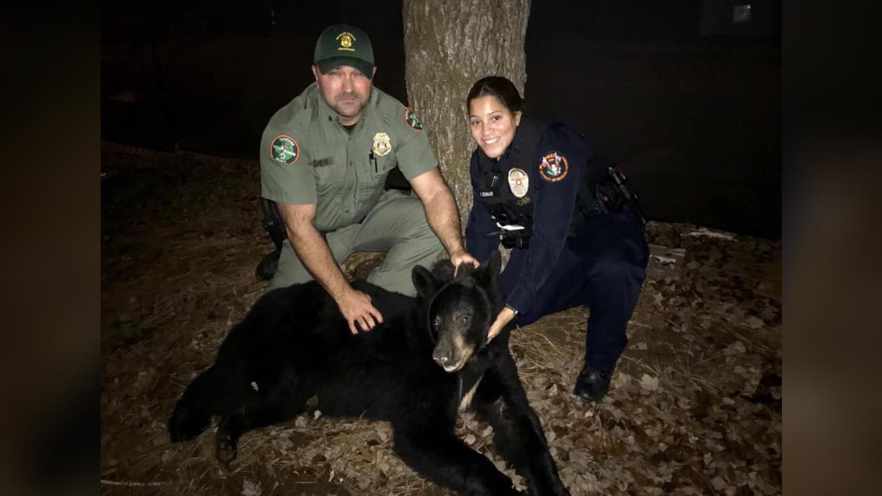 Bear found stuck inside UT baseball stadium