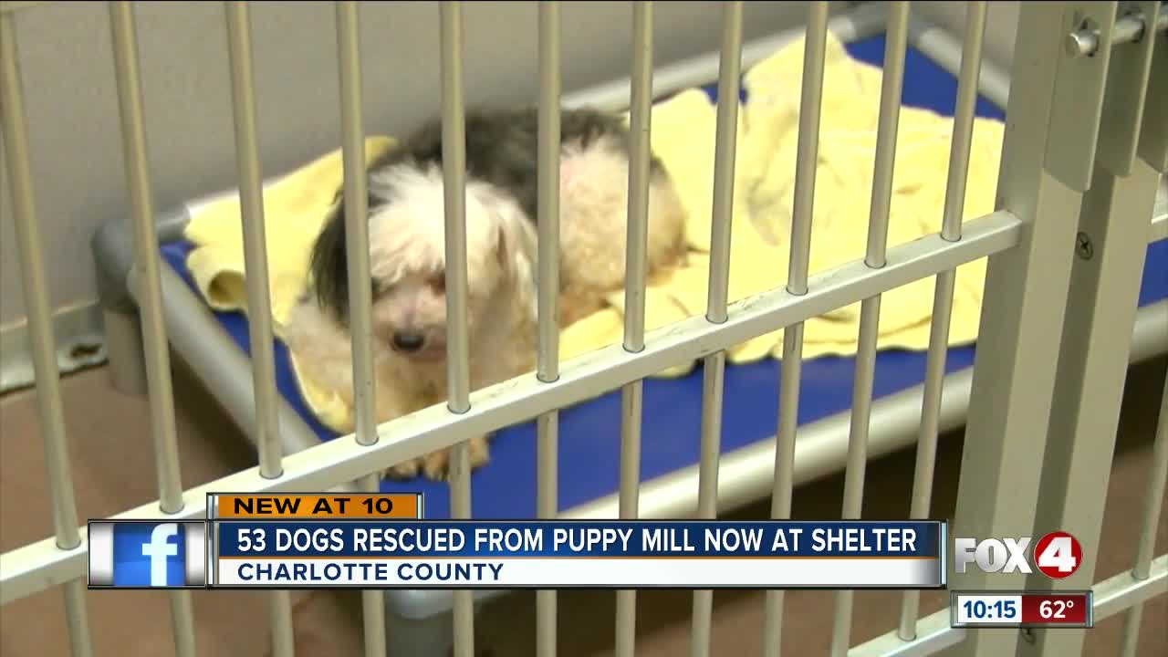 53 Dogs Rescued From Puppy Mill Available For Adoption At Charlotte County Shelter