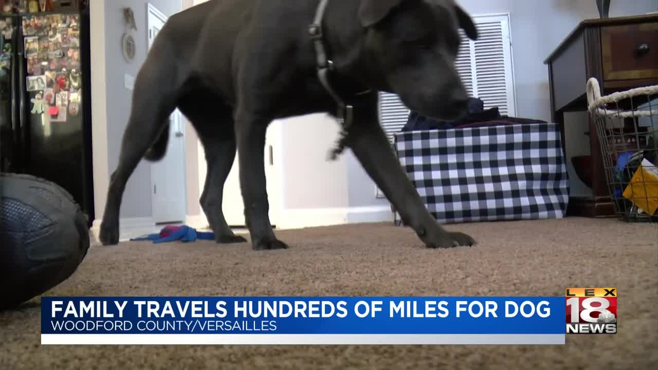 Versailles family travels thousands of miles to save shelter dog