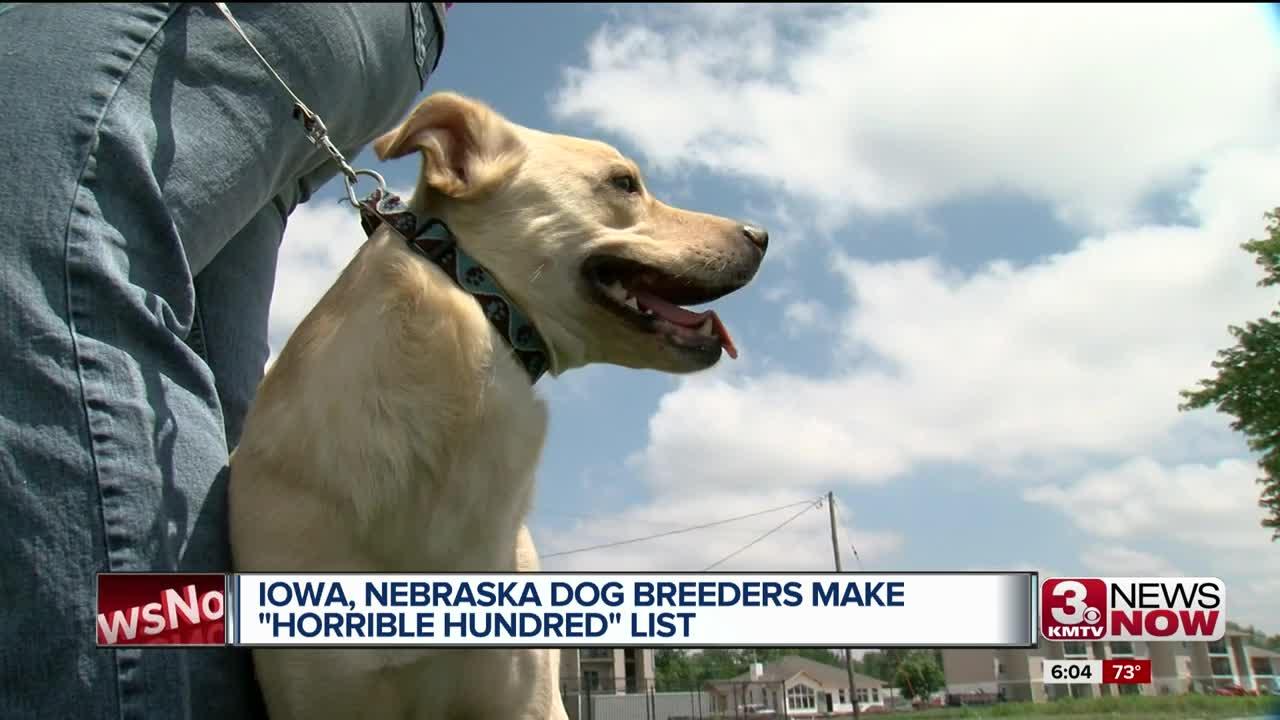 Nebraska, Iowa dog breeders on list of 'Horrible Hundred' puppy mills