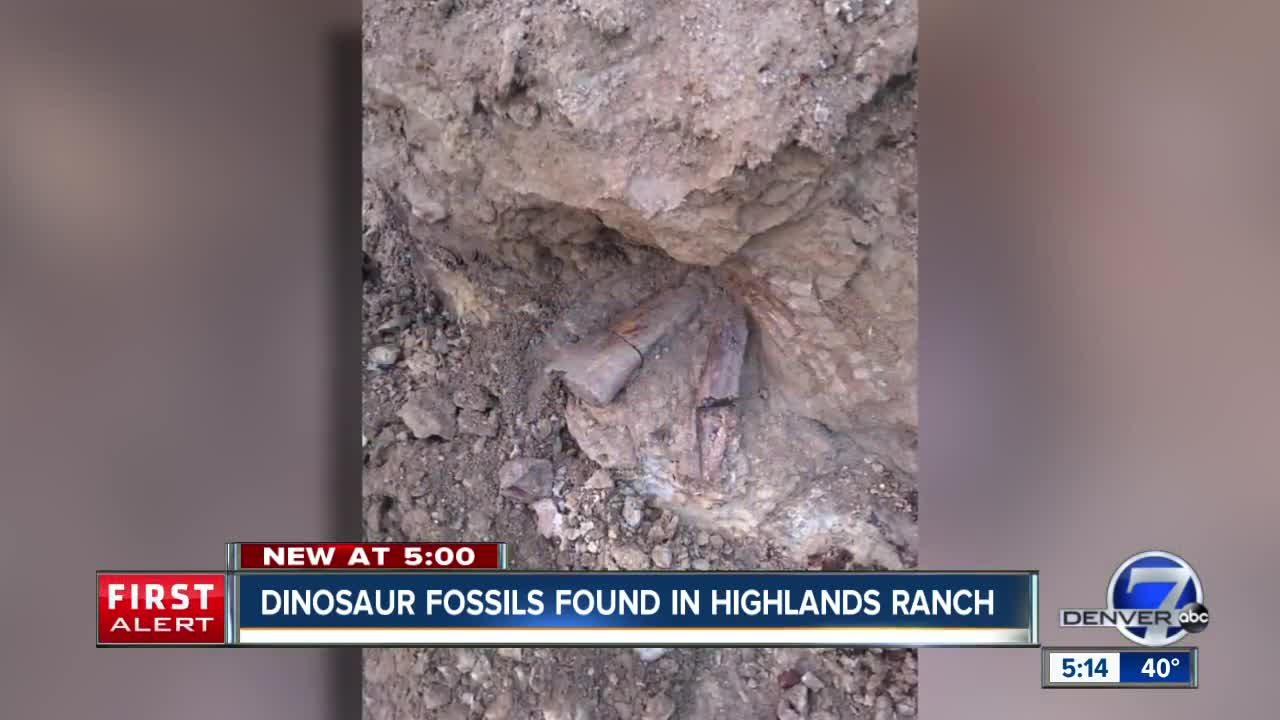 construction crews dig up dinosaur fossils in highlands ranch