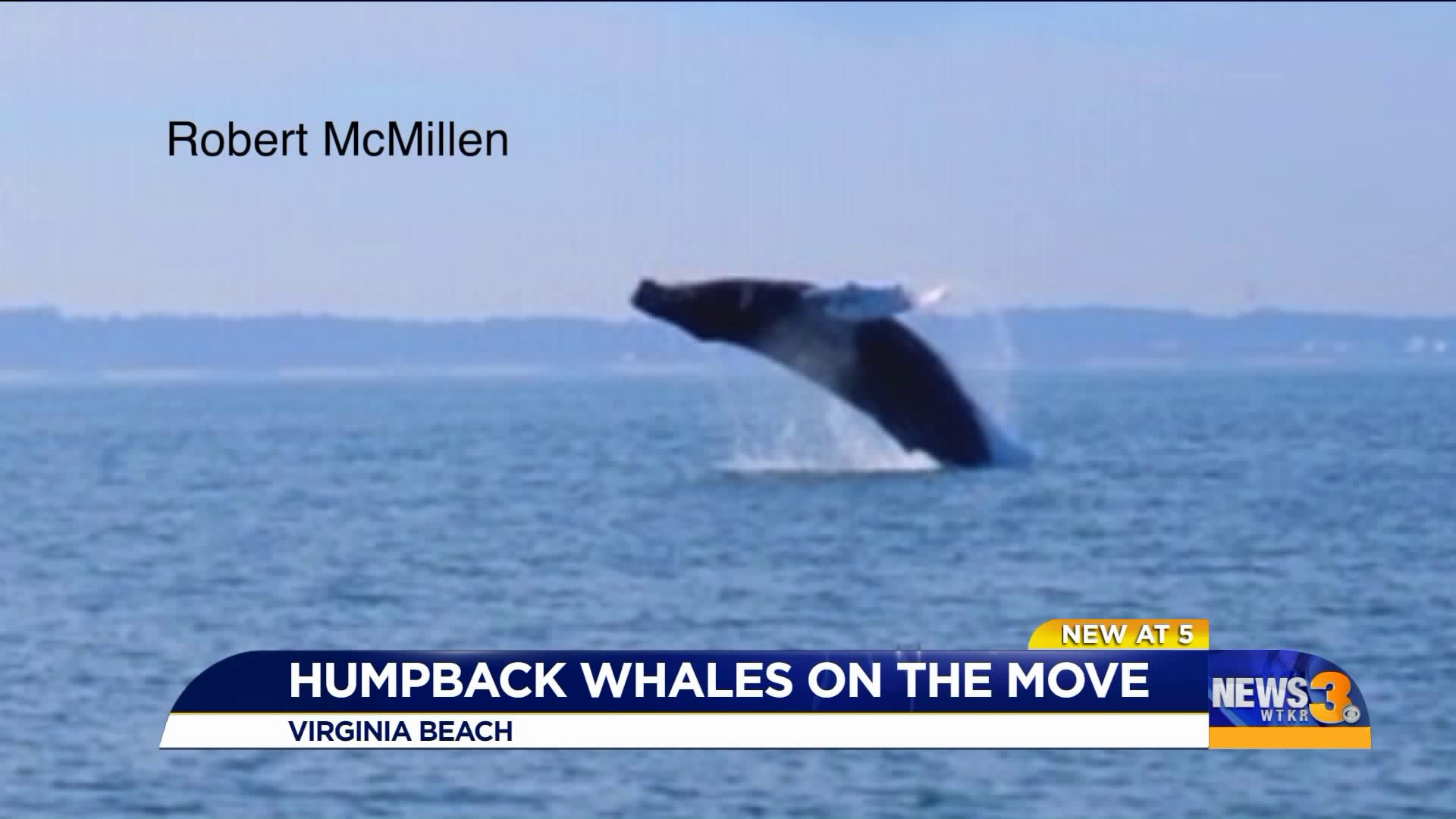 Humpback Whales Spotted Off The Coast
