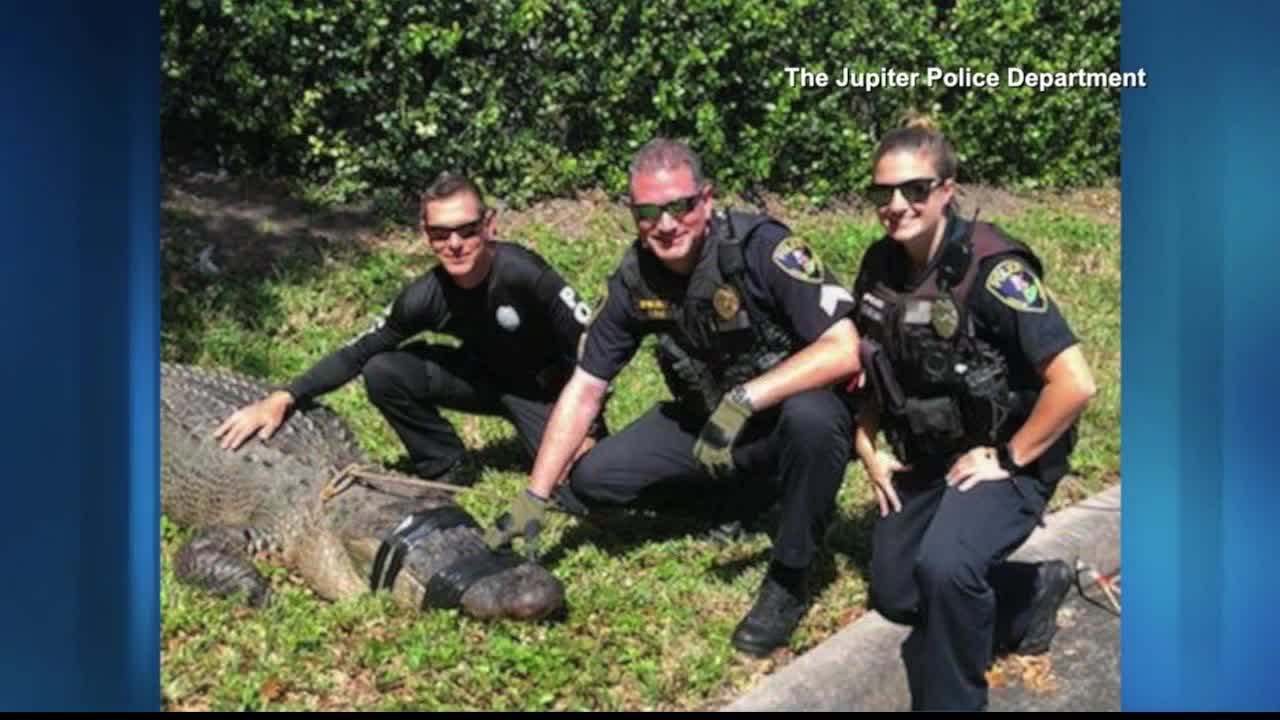 750-pound, 100-year-old gator safely removed from Florida commerce park