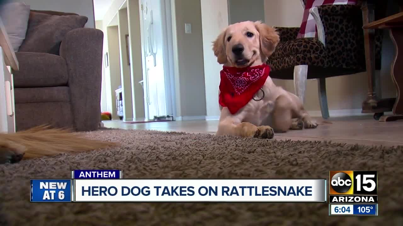 Dog who saved owner from rattlesnake bite in Anthem honored at