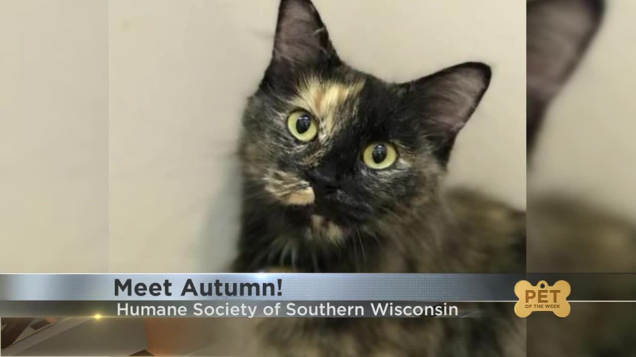 Pet Of The Week Meet Autumn
