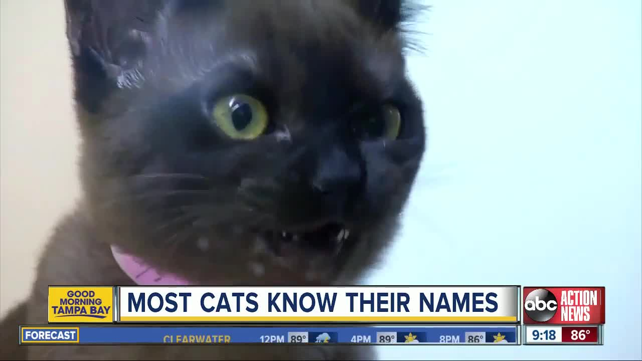 Cats understand their names and are probably just choosing to ignore